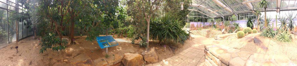 Zone tropicale sèche des serres du Conservatoire botanique national de Brest